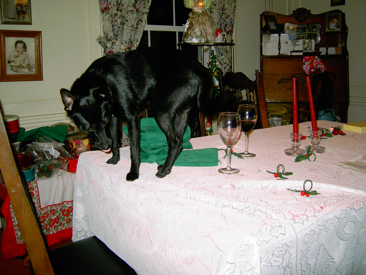 Small black dog on Christmas dinner table