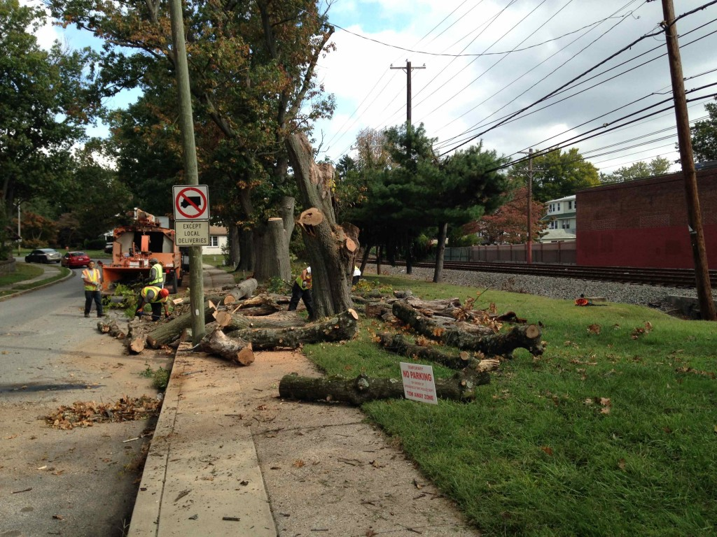 Good Government Of Springfield SEPTA Tree Removal